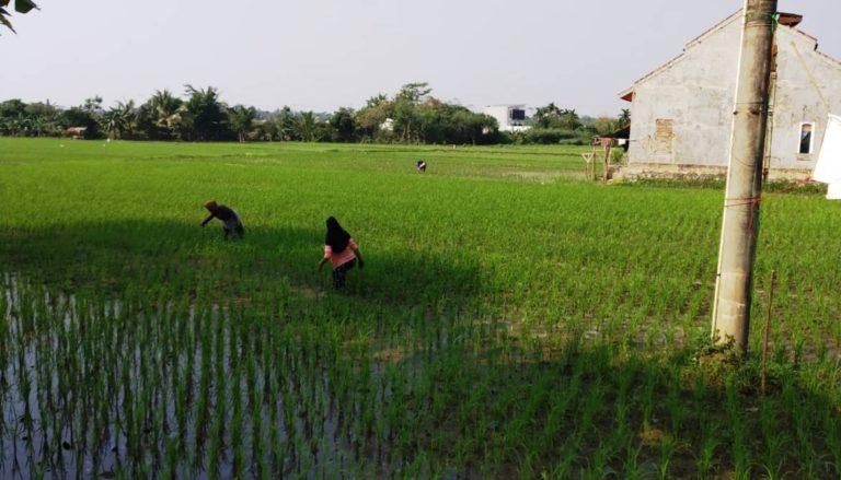 Kabupaten Tangerang Tertinggi Kasus Alih Fungsi Lahan